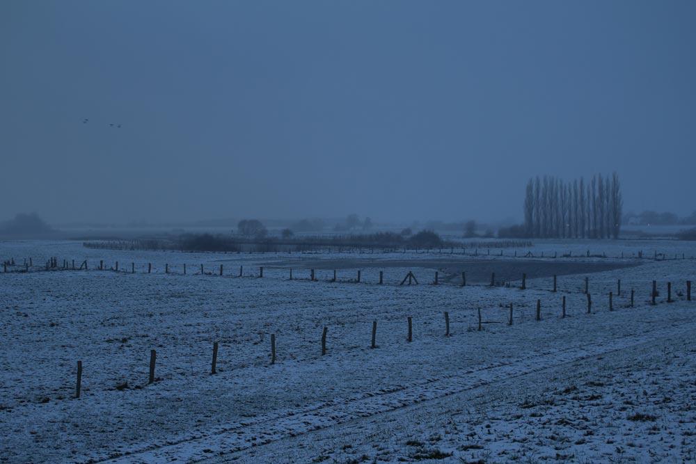altengammer-elbwiesen-winter-vier-und-marschlande-02